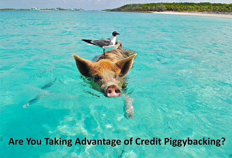 Tradelines, Credit Piggybacking